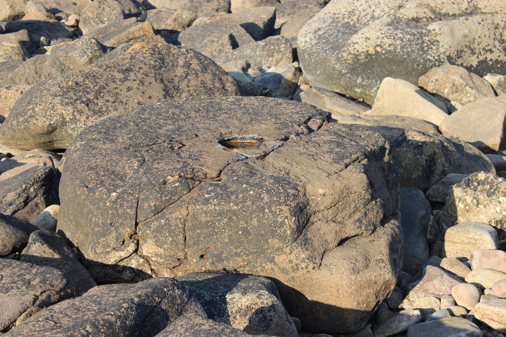 'Rough out' of a millstone in the intertidal quarry near Rockcliffe