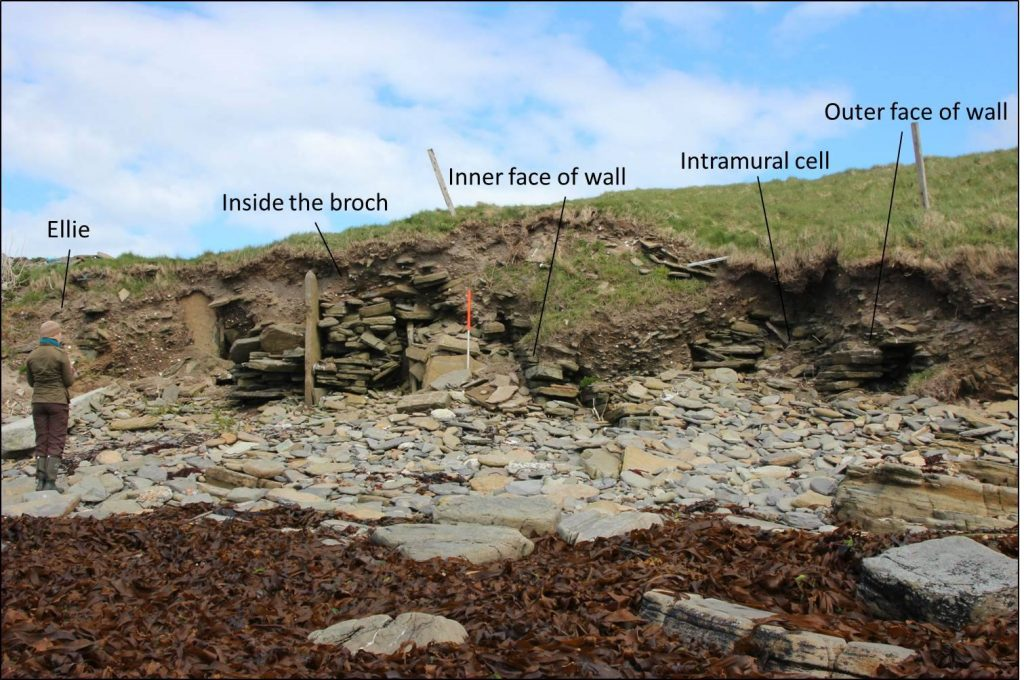 A perfect little half-sectioned broch tucked into a corner of Lopness Bay on Sanday. If we were to clear some of the beach stone we could probably find more of the plan - and maybe even an underground chamber as at Channerwick.