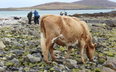 Submerged forests and fishing heritage in the Western Isles