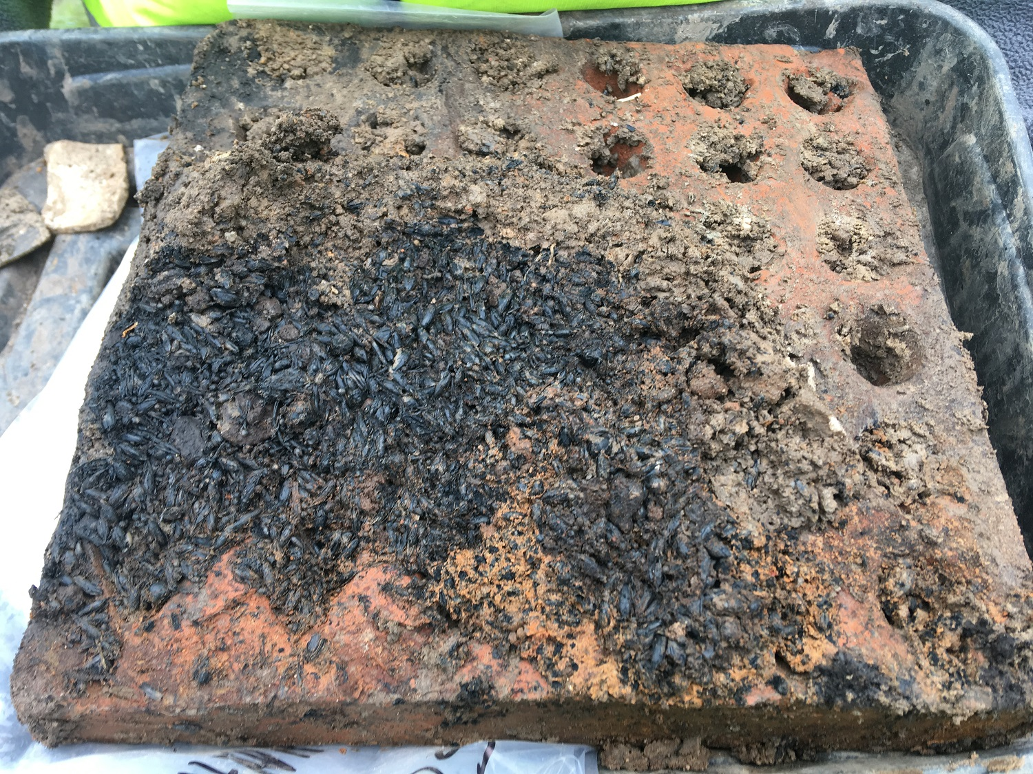 Square red brick with small hoes and charred grain attached
