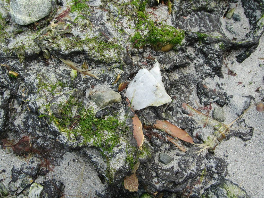 Detail of bone and white quartz embedded into sand an seaweed covered peat
