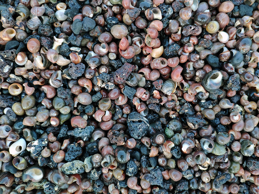 Close up of winkle shells mixed with rounded pebbles made of fuel slag